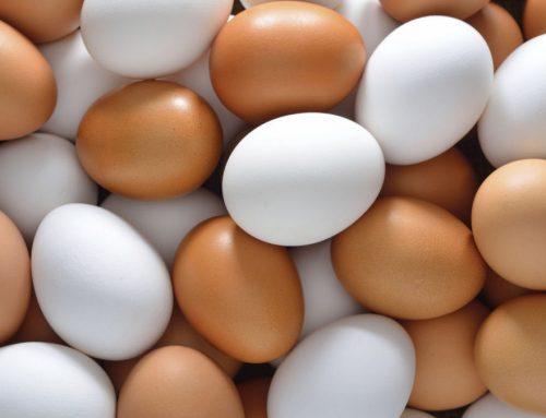 Cozinha básica: Cozinhando ovos!