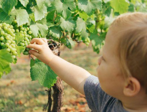 Alimentação saudável infantil: 5 dicas para fazer o seu filho comer melhor