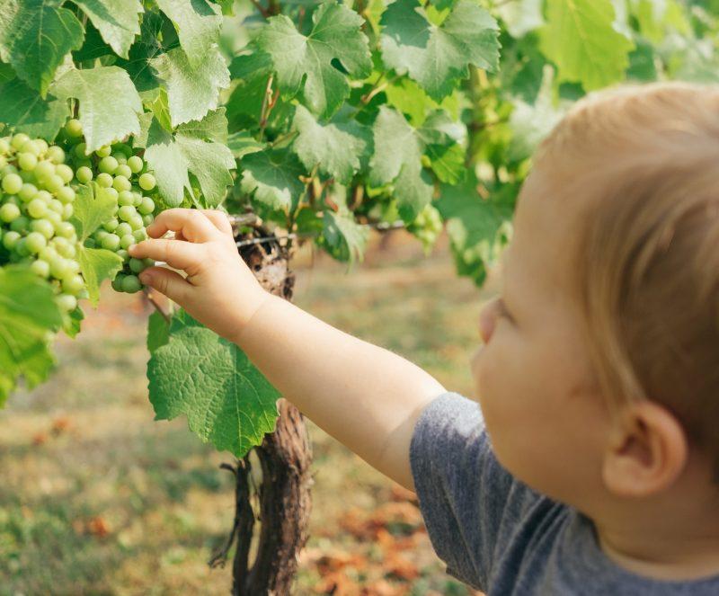 Criança comendo uvas verdes - alimentação saudável infantil